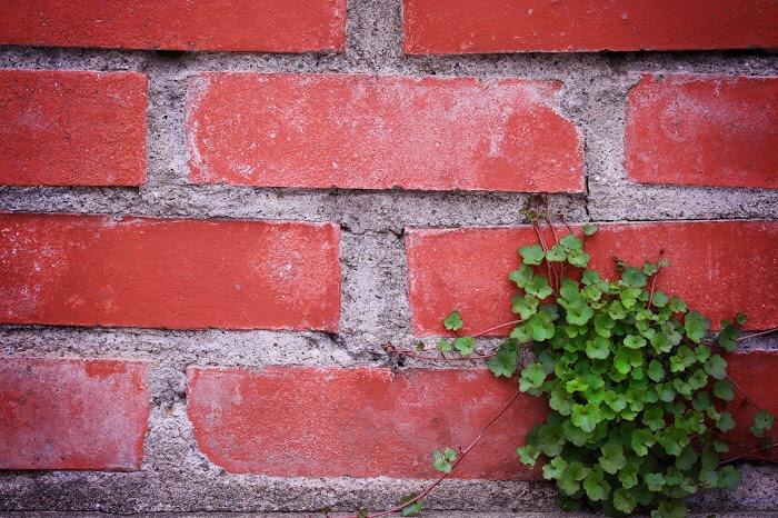 レンガの壁と植物の画像