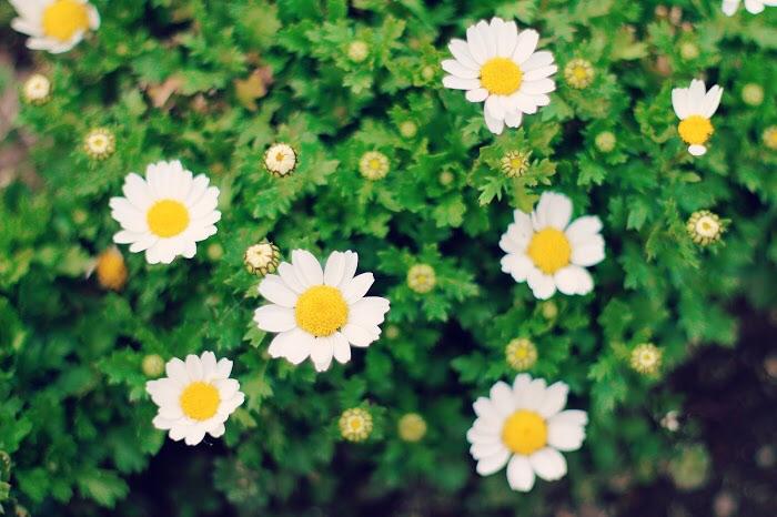 かわいい小花の写真画像