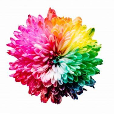 虹色の花の写真画像