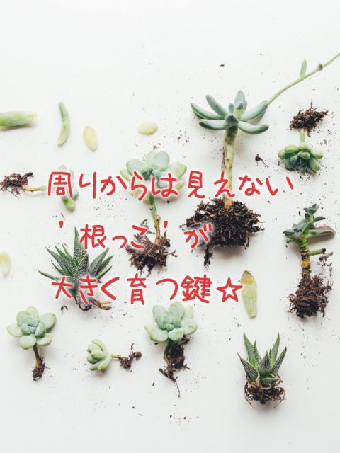 周りからは見えない根っこが大きく育つ鍵と書いた植物の写真画像